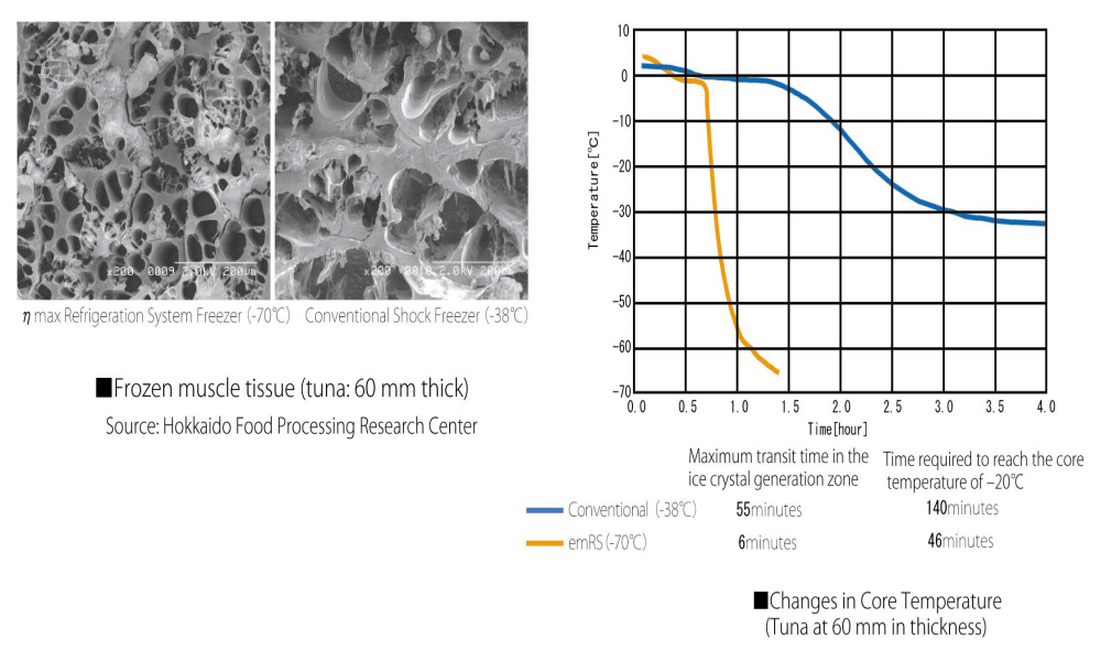 HIGHER QUALITY FOOD THROUGH CRYOGENIC PROCESSING CELL STRUCTURES REMAIN INTACT